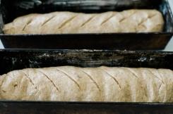 Squash Bread-4